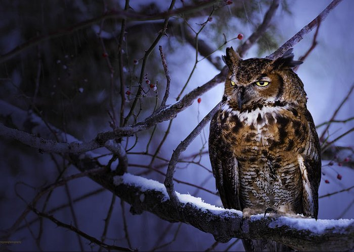 Animal Greeting Card featuring the photograph Great Horned by Ron Jones