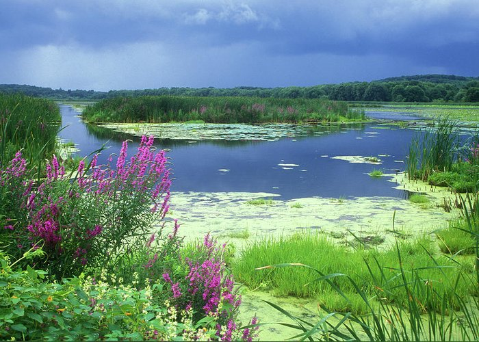 Great Meadows National Wildlife Refuge Greeting Card featuring the photograph Great Meadows National Wildlife Refuge by John Burk