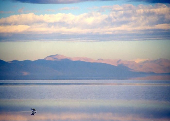 Lake Greeting Card featuring the photograph Great Salt Lake Pastel Morning by Steve Ohlsen