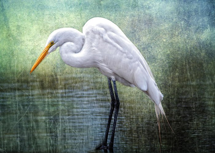Egret Greeting Card featuring the photograph Great White Egret by Bonnie Barry