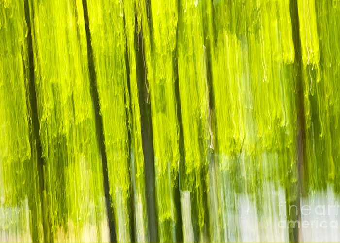 Abstract Greeting Card featuring the photograph Green Forest Abstract by Elena Elisseeva