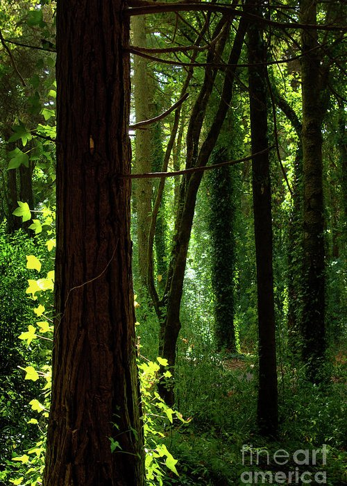 Autumn Greeting Card featuring the photograph Green Forest by Carlos Caetano