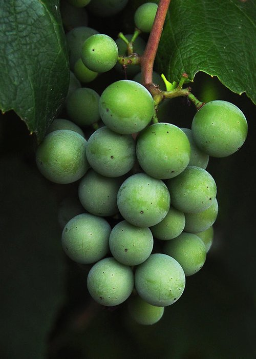 Grapes Greeting Card featuring the photograph Green Grapes by Marion McCristall
