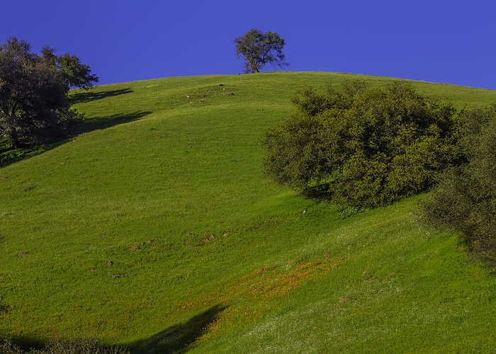 Hill Side Greeting Card featuring the photograph Green Hill With Poppies by Garry Gay