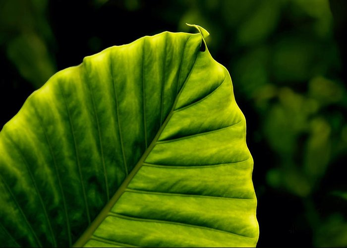 Leaf Greeting Card featuring the photograph Green Leaf by Lyle Huisken