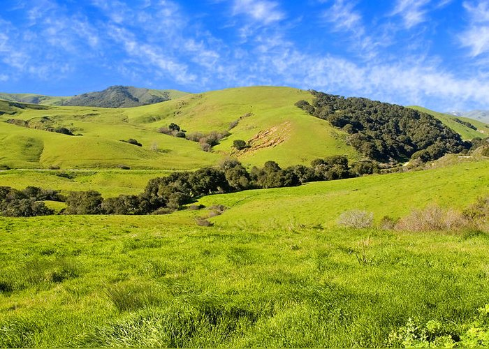 Green Greeting Card featuring the photograph Green Meadow Santa Ynez Valley Ca by Eyal Nahmias
