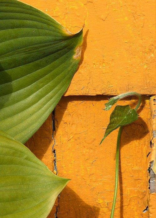 Color Greeting Card featuring the photograph Green On Orange 4 by Art Ferrier