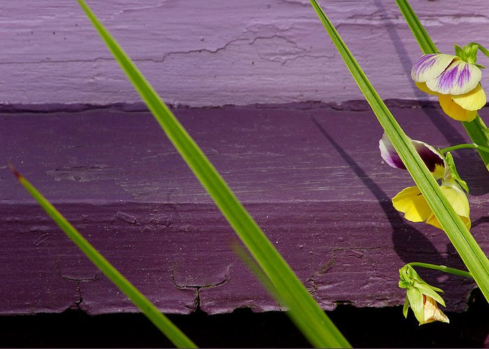 Abstract Greeting Card featuring the photograph Green On Purple 6 by Art Ferrier