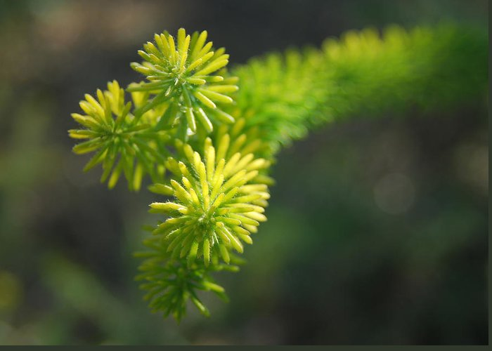 Plant Greeting Card featuring the photograph Green Spikes by Nick Petkov