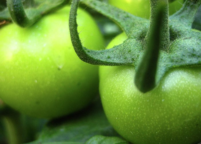 Green Tomatoes No.3 Greeting Card featuring the photograph Green Tomatoes No.3 by Kamil Swiatek