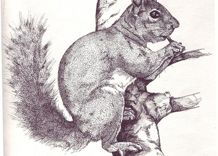 Squirrel Greeting Card featuring the drawing Grey Squirrel by Debra Sandstrom