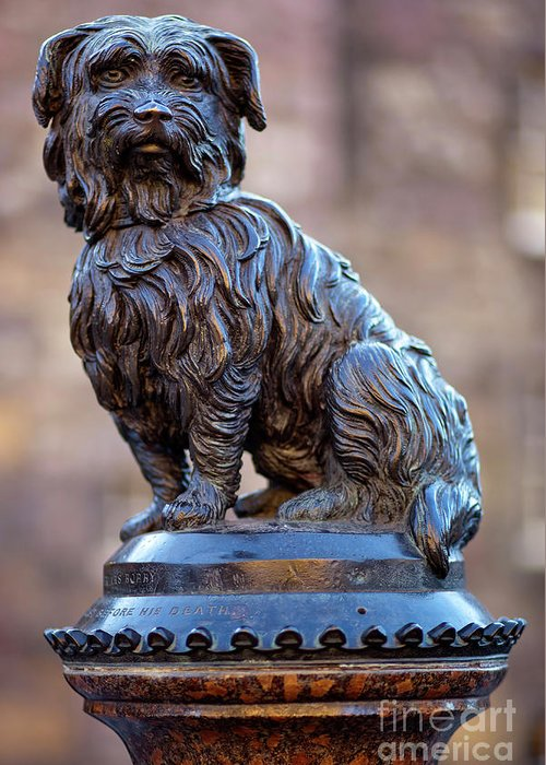 Bobby Greeting Card featuring the photograph Greyfriars Bobby by Andre Goncalves