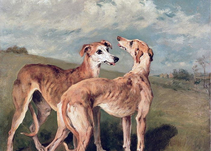Greyhounds (oil On Canvas) By John Emms (1843-1912) Greeting Card featuring the painting Greyhounds by John Emms