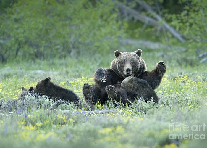 Bears Greeting Card featuring the photograph Grizzly Romp - Grand Teton by Sandra Bronstein