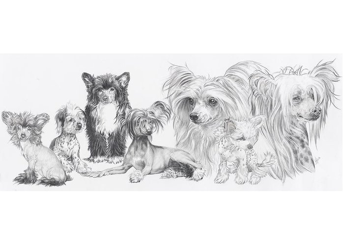 Dog Greeting Card featuring the drawing Growing Up Chinese Crested And Powderpuff by Barbara Keith