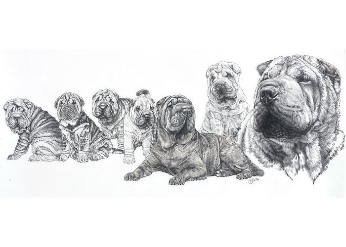 Non-sporting Group Greeting Card featuring the drawing Growing Up Chinese Shar-pei by Barbara Keith