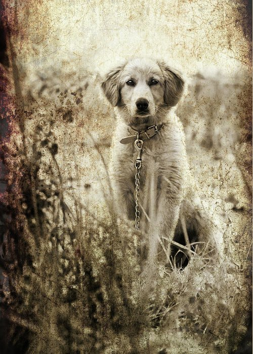 Greeting Card featuring the photograph Grunge Puppy by Meirion Matthias