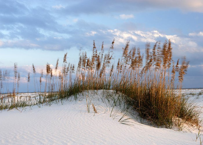 Alabama Greeting Card featuring the photograph Gulf Dunes by Eric Foltz
