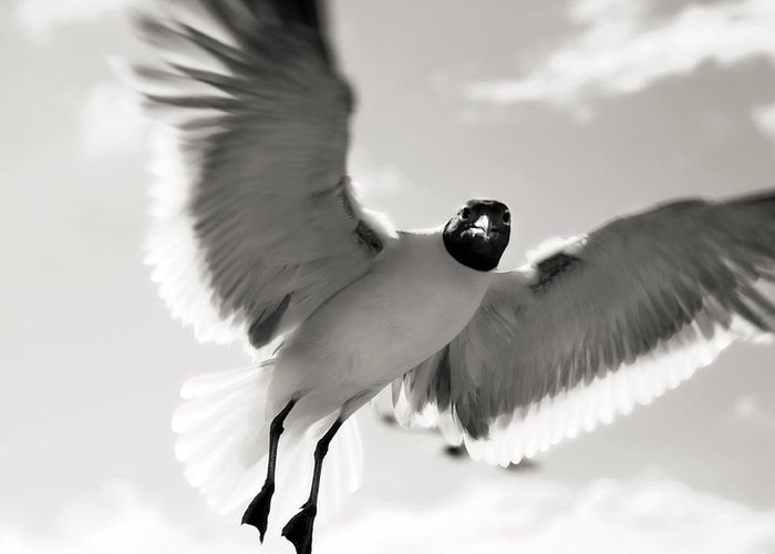 Seagull Greeting Card featuring the photograph Gull In Flight 2 by Marilyn Hunt