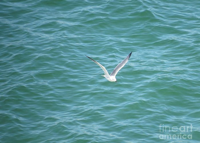 Laughing Gull Greeting Card featuring the photograph Gull Over The Gulf by Charles Green