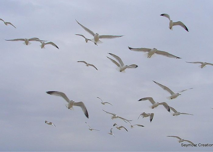 Birds Sky White Greeting Card featuring the photograph Gulls by Luciana Seymour