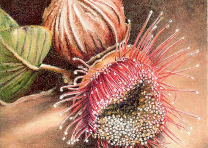 Australia Greeting Card featuring the painting Gumnut And Flower by Robynne Hardison