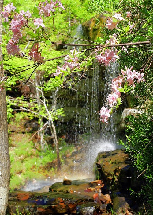 Haily Falls Greeting Card featuring the photograph Haily Falls by Marty Koch
