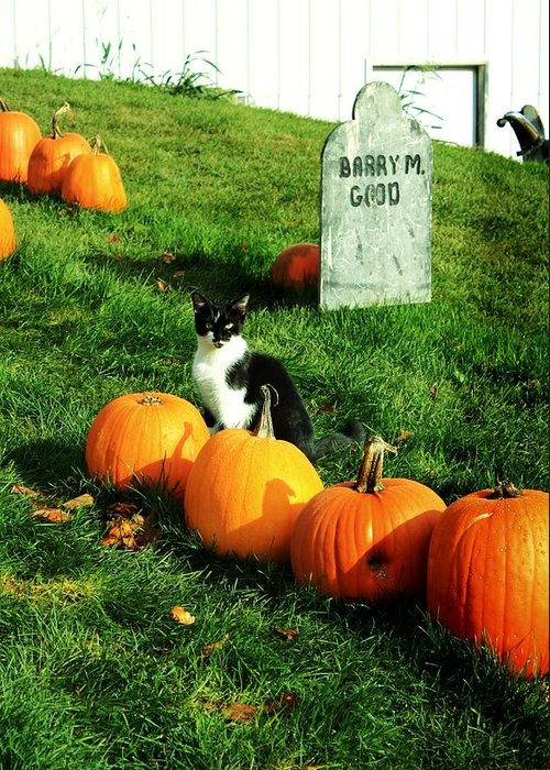 Cat Greeting Card featuring the photograph Halloween Cat by Sherry LaFaver