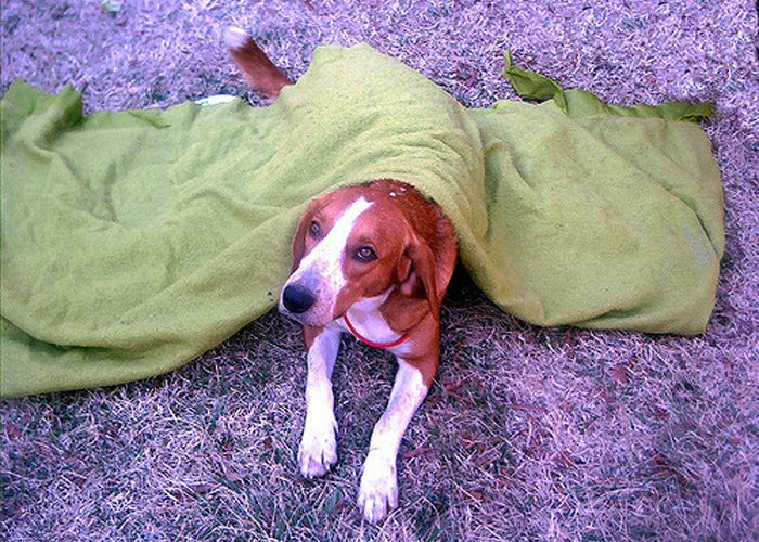 Dog Greeting Card featuring the photograph Hamboneblanket by Curt Curt