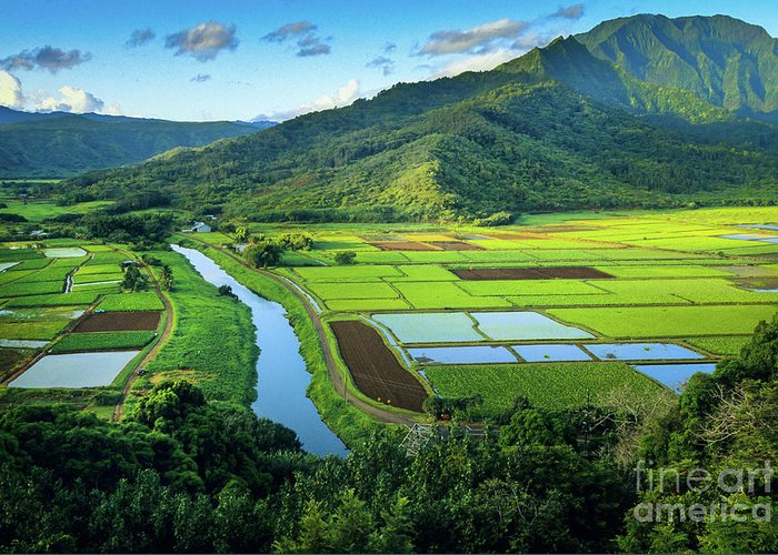 America Greeting Card featuring the photograph Hanalei Valley by Inge Johnsson