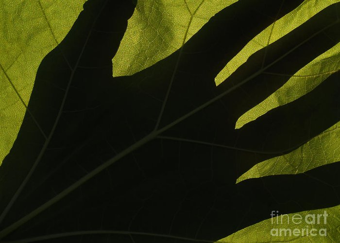 Hand Greeting Card featuring the photograph Hand And Catalpa Veins Backlit by Anna Lisa Yoder
