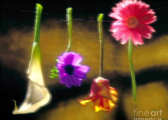 Tulip Greeting Card featuring the photograph Hanging Flowers by Tony Cordoza