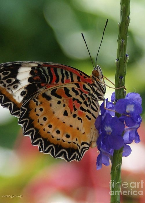 Butterfly Greeting Card featuring the photograph Hanging On by Shelley Jones