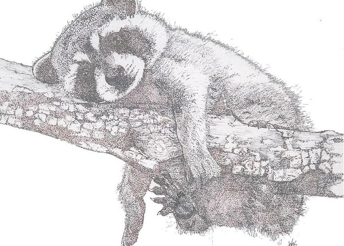 Raccoon Greeting Card featuring the painting Hanging Out by Debra Sandstrom
