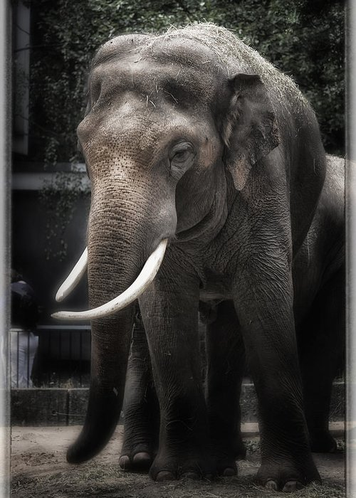 Elephant Greeting Card featuring the photograph Hanging Out by Joan Carroll