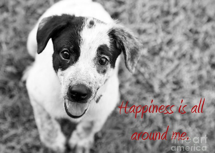 Puppy Greeting Card featuring the photograph Happiness Is All Around Me by Amanda Barcon
