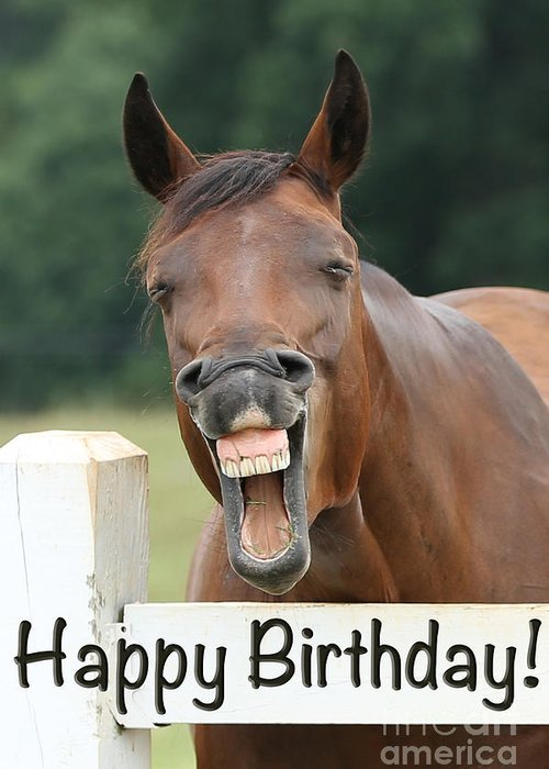 Emotions Greeting Card Featuring The Photograph Happy Birthday Smiling Horse By Jt PhotoDesign