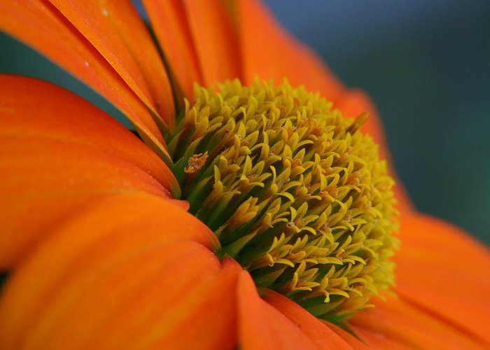 Orange Flower Greeting Card featuring the photograph Happy by Linda Russell