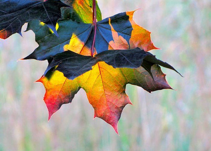 Photography Greeting Card featuring the photograph Harbinger Of Autumn by Sean Griffin