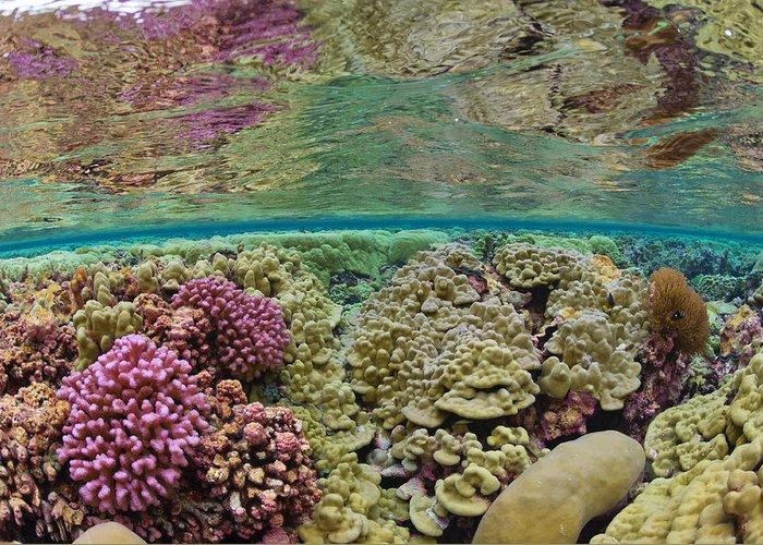 Underwater Greeting Card featuring the photograph Hard Coral Carpets A Shallow Seafloor by Brian J. Skerry