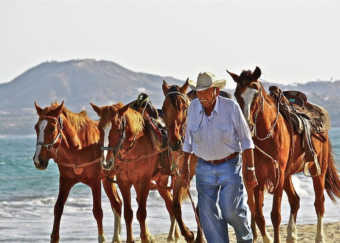Animals Greeting Card featuring the photograph Hardworking Man by Diana Hatcher