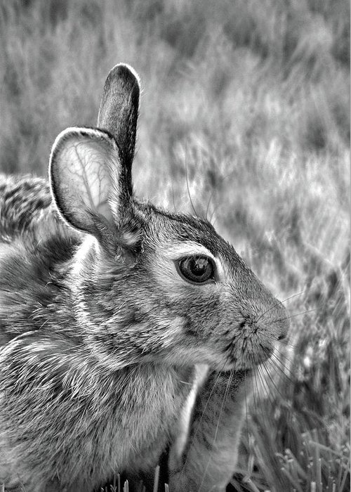 Hare Greeting Card featuring the photograph Hare by Jamieson Brown