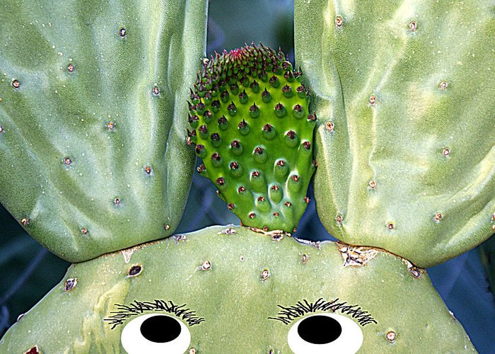 Cactus Greeting Card featuring the photograph Hare Stylist by Greg Taylor