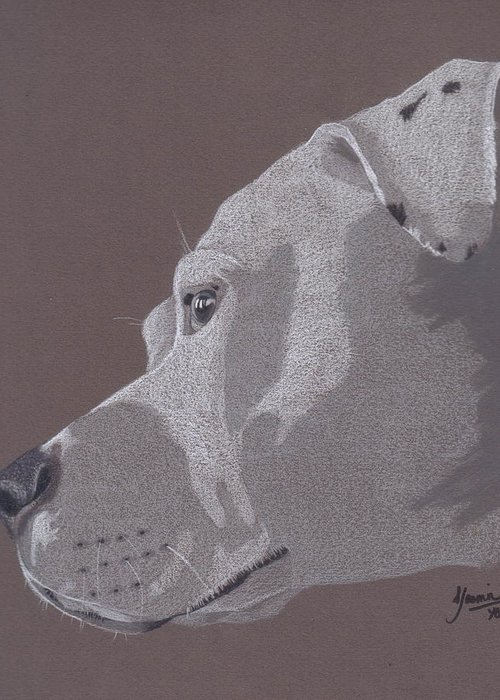 Pit Bull Greeting Card featuring the drawing Harlo by Stacey Jasmin