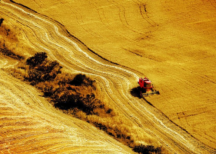 Combine Greeting Card featuring the photograph Harvesting The Crop by Mal Bray