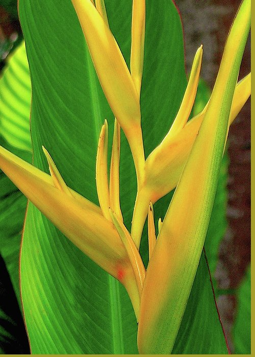 Hawaii Flowers Greeting Card featuring the photograph Hawaii Golden Torch by James Temple