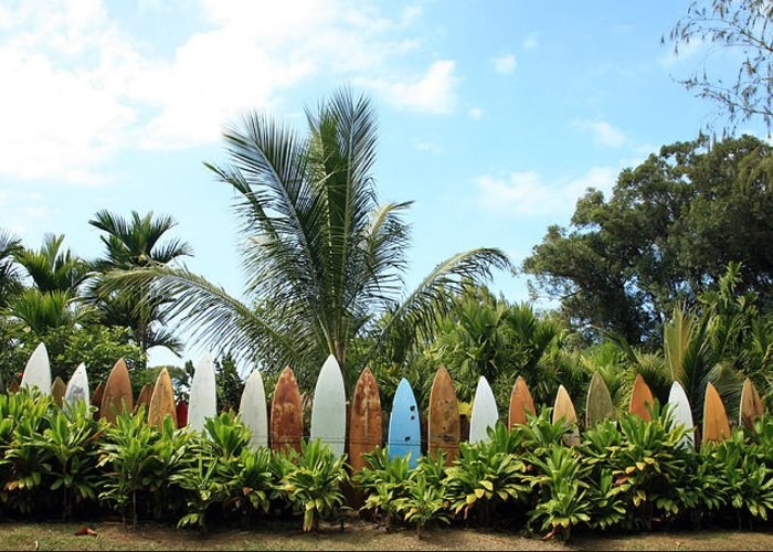 Hawaii Greeting Card featuring the photograph Hawaii Surfboard Fence by Michael Ledray