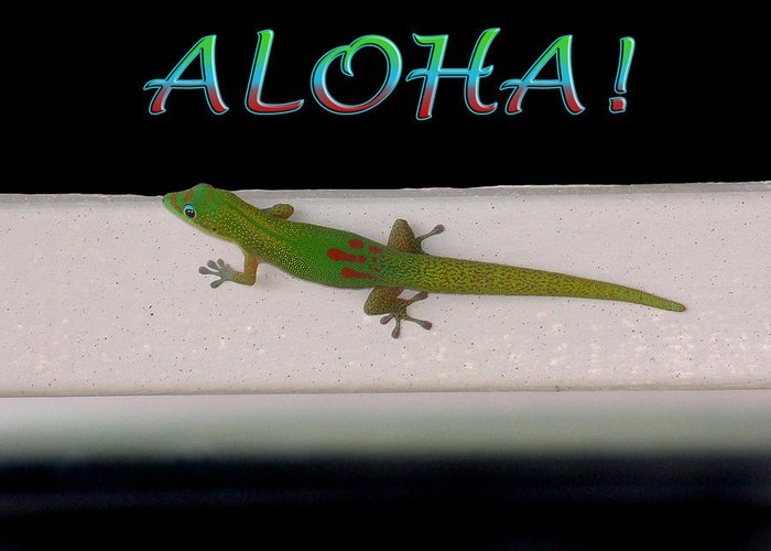 Gold Dust Day Gecko Greeting Card featuring the photograph Hawaiian Gecko by Jessica Westermeyer
