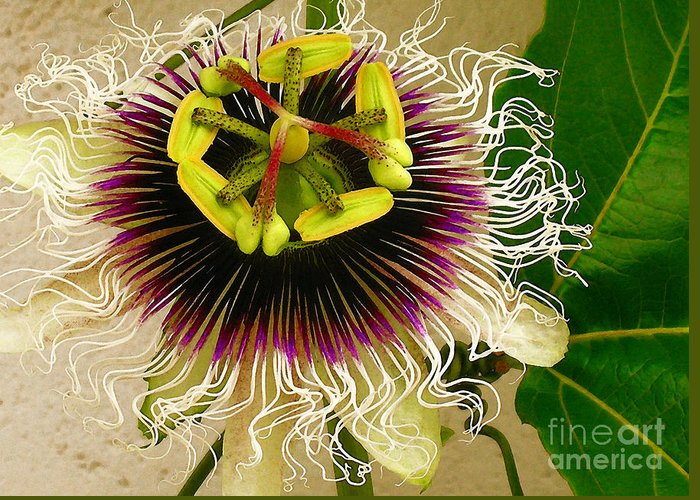 Passion Fruit Flower Greeting Card featuring the photograph Hawaiian Lilikoi by James Temple