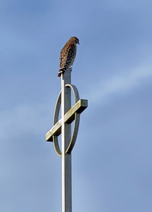 Birds Greeting Card featuring the photograph Hawk On Steeple by Richard Rizzo